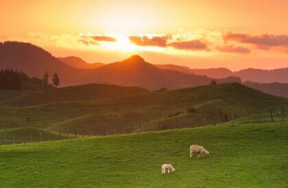 Rural eSpeaking, Winter 2021 Buying or leasing Māori land