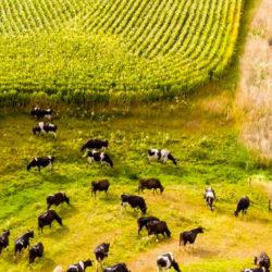 Rural eSpeaking, Winter – Spring 2020, No 33